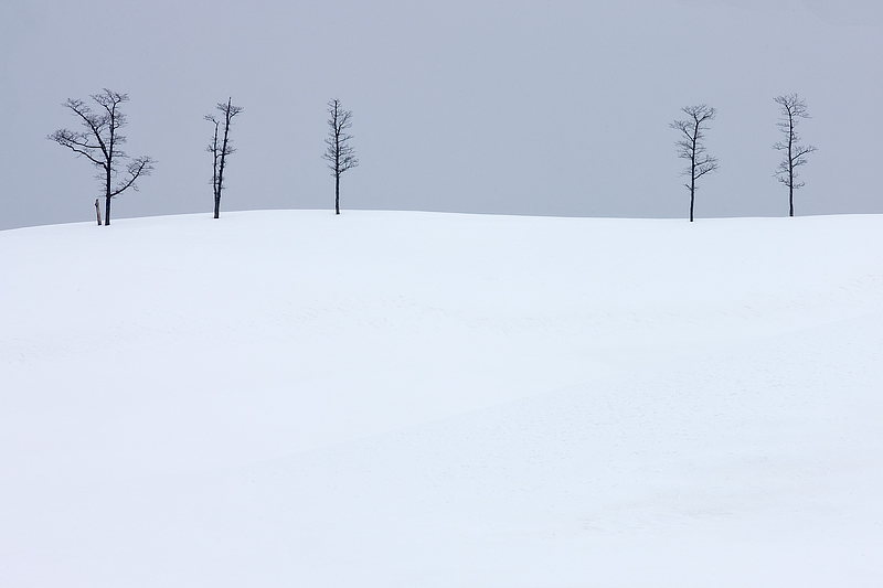 29.-Leafless-Elder-trees-on-top-of-a-snow-covered-hill-Eastern-Hokkaido-Japan
